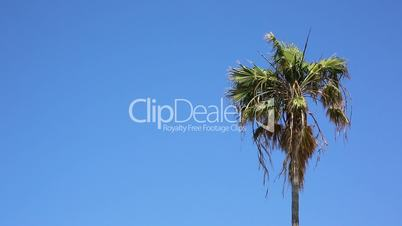 Palm tree against sky background