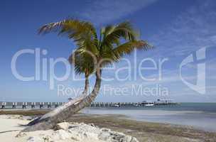Palms on a tropical beach