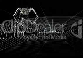 lurking metallic spider and web