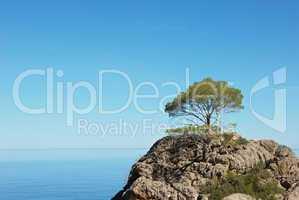 einzelner Baum auf Felsen am Meer
