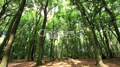 Forest - Wald