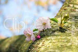 Blütenzweig am Baum