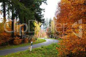 Straße im Herbstwald