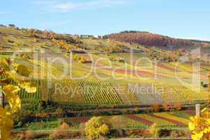 bunte Weingärten an der Mosel