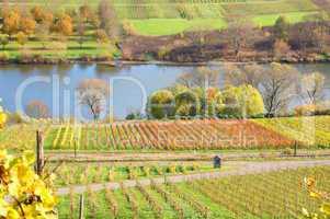 bunte Weingärten bei Reil