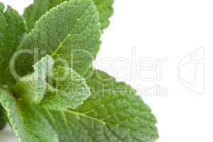 Extreme close up of mint