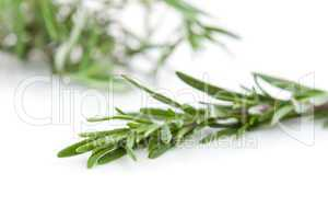 Close up of rosemary branch