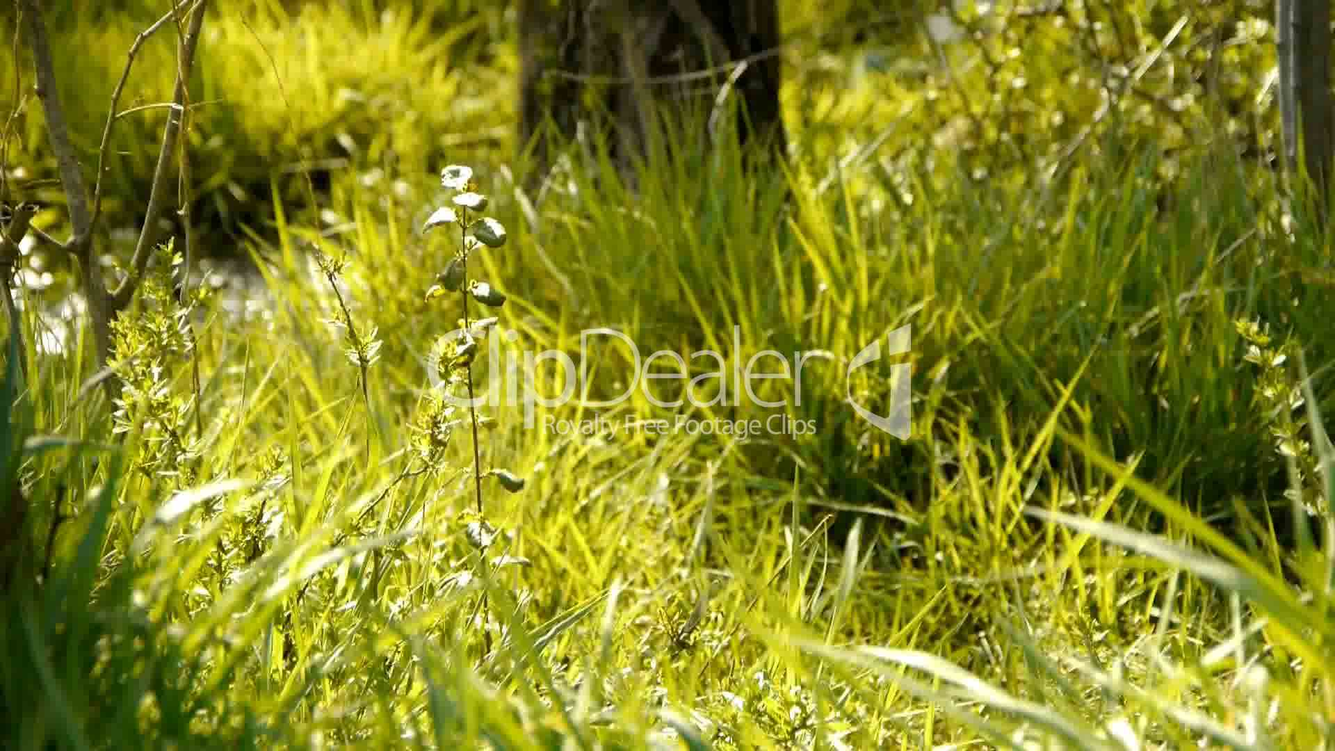 Beautiful Wild Flowers In Grass Royalty Free Video And Stock Footage