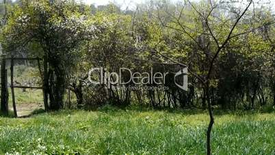 Lush weeds in wind,grassland,fence,gate,door,wall.