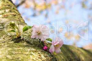 Blüten Wildwuchs