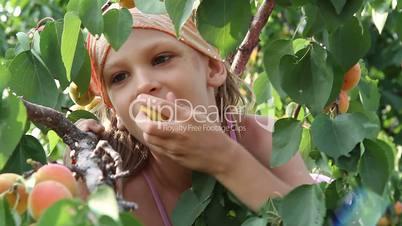 Girl eats apricots