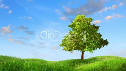 Tree on a lea