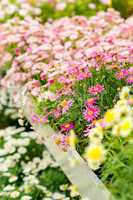 Colorful flowers at garden centre retail store