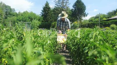 farmer harvesting in organic fields