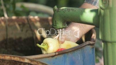 closeup washing fresh vegetables