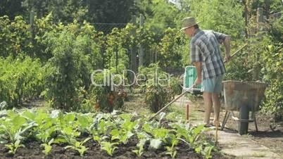 senior farmer working in field