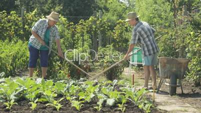 senior farming couple on field