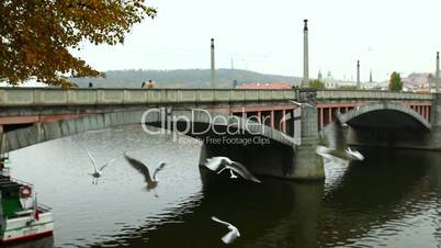 Brücke und Wasservögel