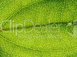 Rainforest Background 2
