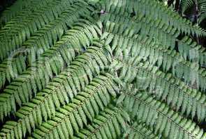 Rainforest Background 6