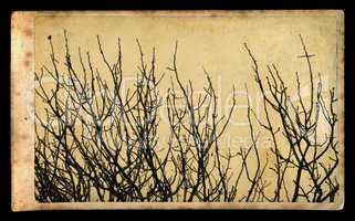 branches on vintage photo paper
