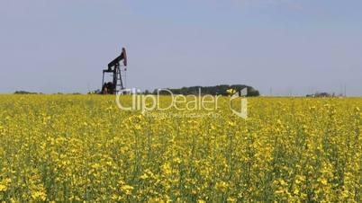 Oil Pump In Canola Field