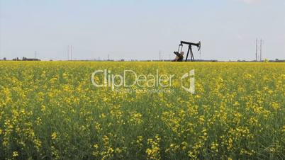Oil Derrick In Canola Field