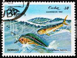 Postage stamp Cuba 1981 Common Dolphinfish, Dorado