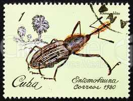 Postage stamp Cuba 1981 Weevil, Rhina Oblita, Insect
