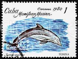 Postage stamp Cuba 1980 Bottlenose Dolphin
