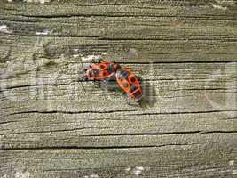 The motley bugs on the bark
