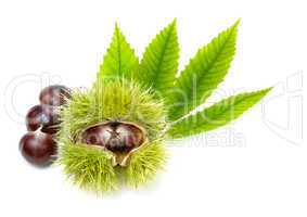 Fresh chestnuts with green leaves, isolated