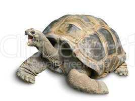 Tierportrait einer Riesenschildkröte