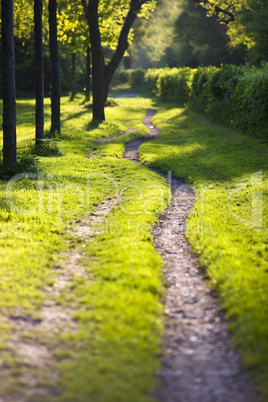 Sunlit and ethereal path
