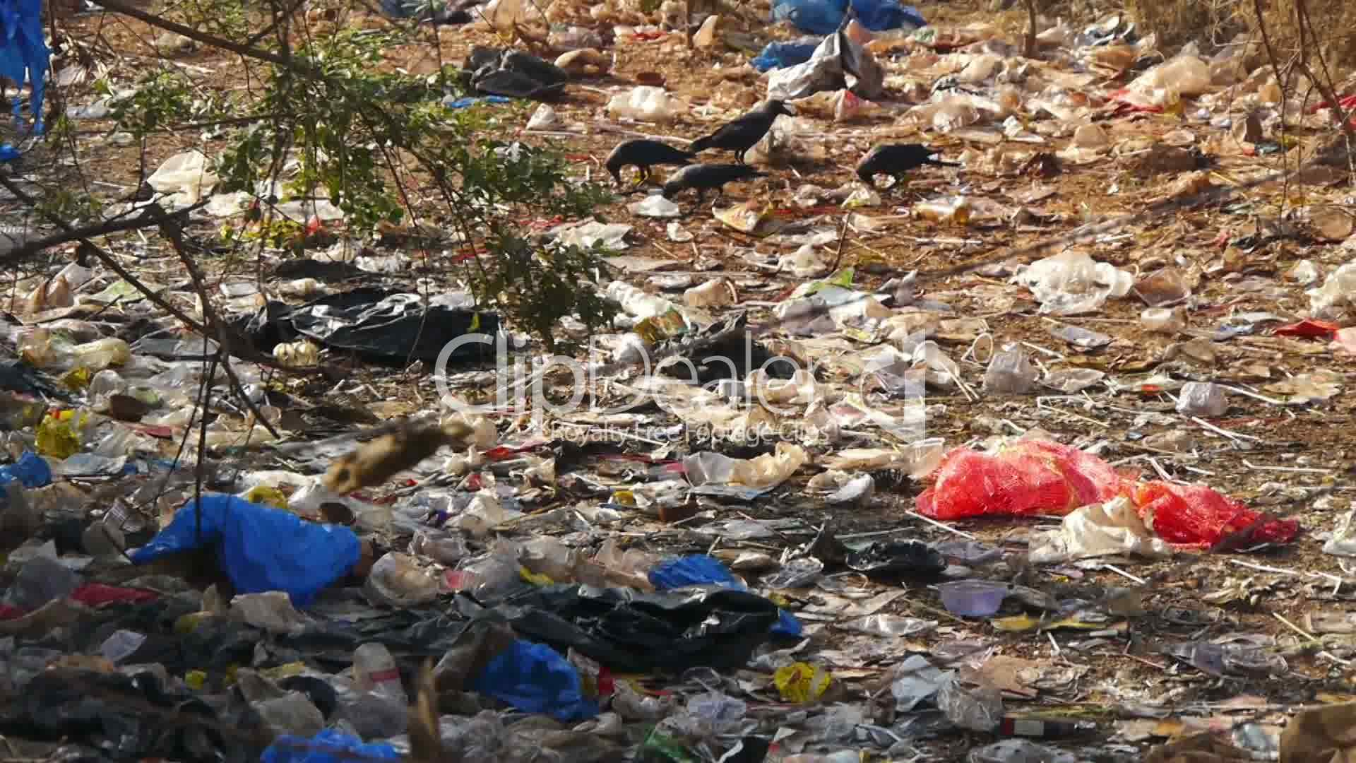 Pollution In India Royalty Free Video And Stock Footage