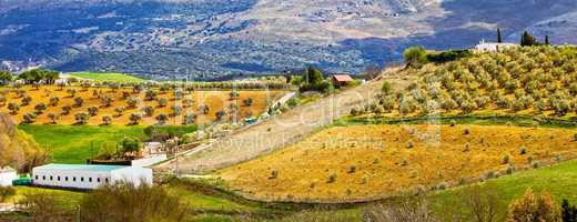 Andalusia Countryside Panorama