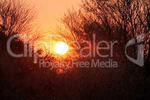 Red Bushveld Sunset