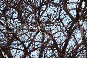 Bushveld Thorn Mesh