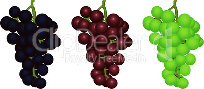 Grapes of different grades