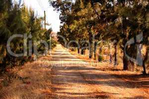 Pine Tree Lane Gravel Road