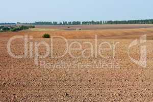 Field near the village