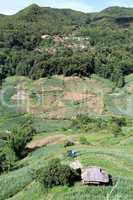 Village and tea plantation