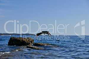 Mann im Anzug springt von kleiner Klippe / Felsen ins Meer