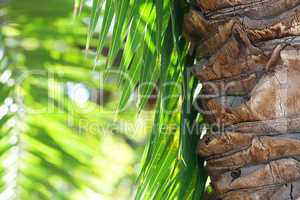 leaf of palm tree in sunlight