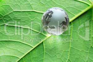 Globe On Green Leaf