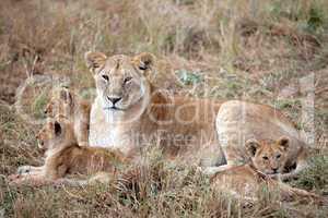 female Lion and lion cub