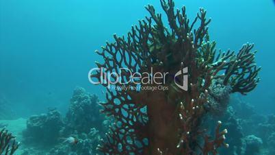 Unterwasserwelt: Am Riff, El Quseir, Ägypten, Rotes Meer