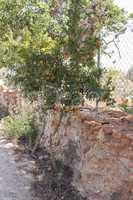 baum mit reifen granatäpfelnin einem Garten im Suommer