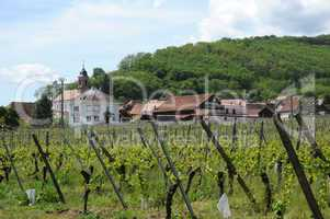 France, vineyards of Orschwiller in Alsace