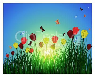 sun meadow